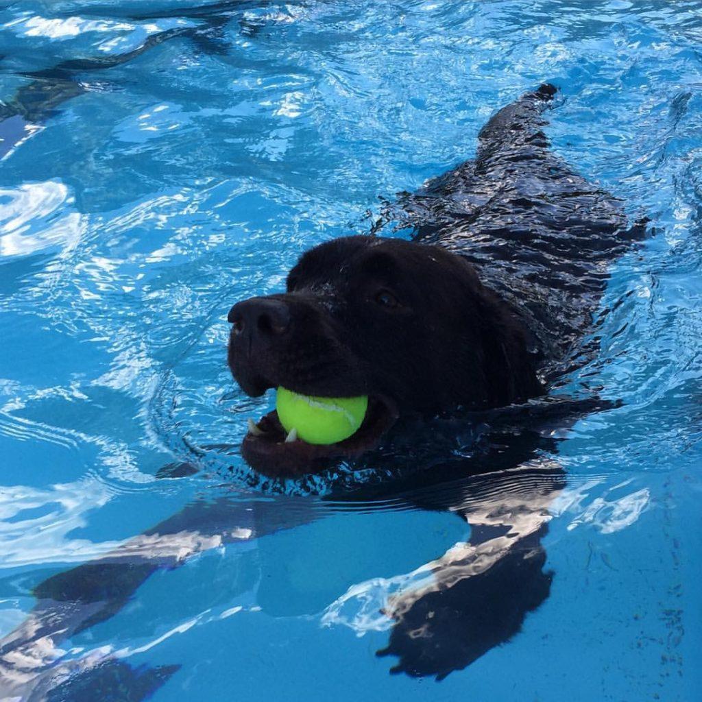 Dog Days at Scott Carpenter Pool
